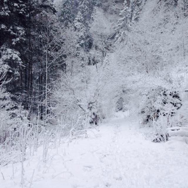 clar_Bollement_Winter3